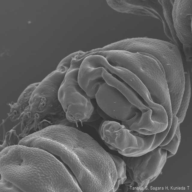 −273℃でも100℃でも死なない地球上最強の生物!?「クマムシ」の生態について専門家に聞いてみた!
