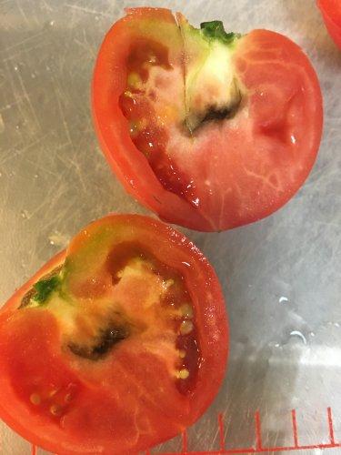 黒い 斑点 トマト ミニ