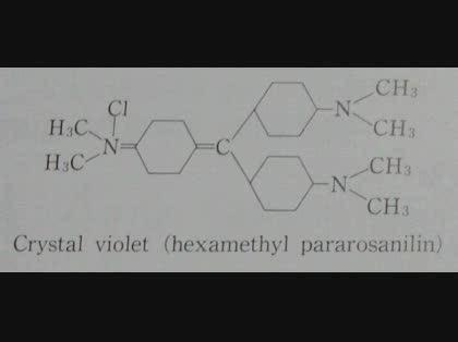 ホルマリン固定後のグラム陽性菌の染色
