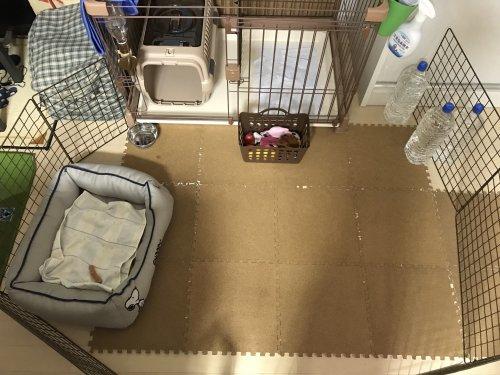 やり直し トレーニング 犬 トイレ
