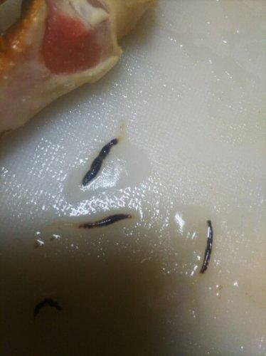 カニ 寄生 虫