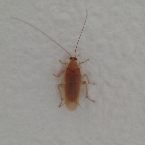 「この虫なんですか、 対処方知りたし。」の質問画像