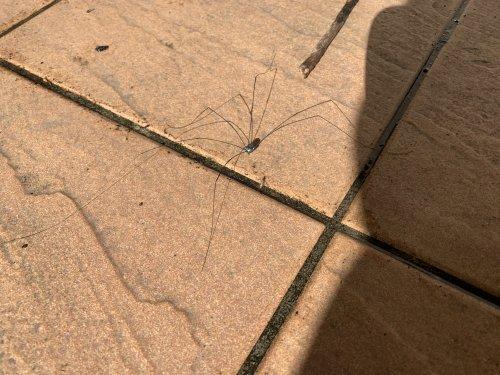 虫 クモ みたい な