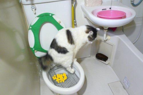 過ぎ 子猫 食べ