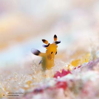まるでピカチュウ!?海中できらめくこの生き物の正体は……?