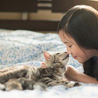 飼い主がインフルエンザ。猫にうつる?