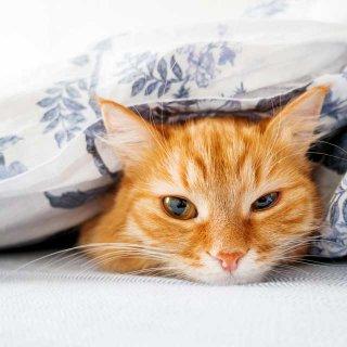 愛する猫のため、冬の間に気を付けておきたいこと