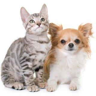 どっちも好き!犬と猫が平和に同居するには……獣医師に聞いてみた