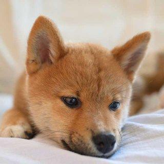 はじめて犬を飼うときに知っておきたいことを家庭犬訓練士に聞いてみた