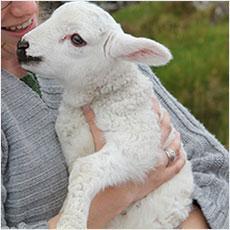 プードルと騙されて羊を買わされた話