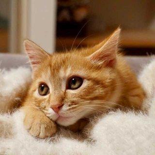 家と外を自由に出入りする「外飼い猫」を完全室内飼いにすることはできるのか?