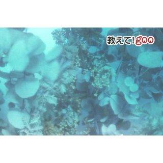【身近な物を活用】まるで深海にいるような幻想的な写真を撮る裏技
