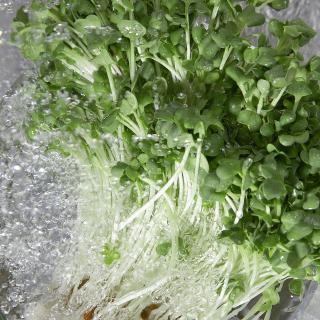 「かいわれ大根の日」にちなみ、かいわれ大根の栄養価とおいしく食べるためのレシピ
