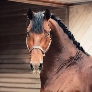 ペット可のマンションで、馬は飼えるのか!?