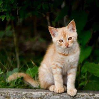 獣医師が指摘!生後間もない子猫の狩りに注意した方がいい理由