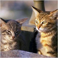 猫はなぜ集会を開くのか