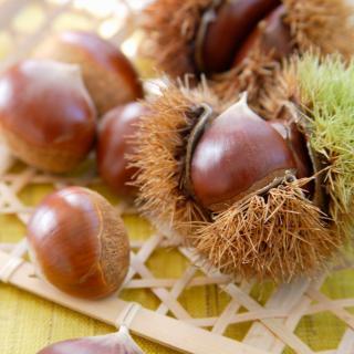 秋はすぐそこ!虫喰い栗の見分け方と簡単皮むきを専門家が解説