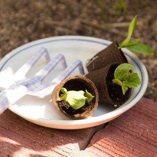 家庭菜園に実はオススメ!植木鉢でのメロンの栽培、方法とコツ