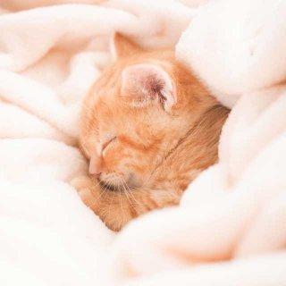 猫に危険な香りがある?猫の冬の生活に潜む猫にとっての危険をキャットシッターに聞いてみた