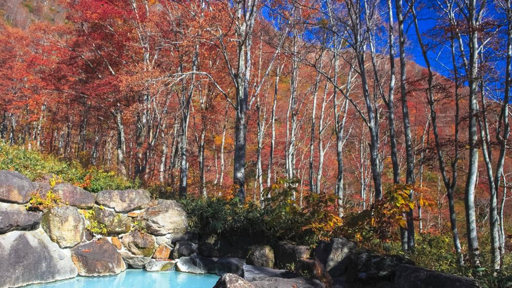 Open-air spas (Roten-buro) where you can enjoy the crimson foliage