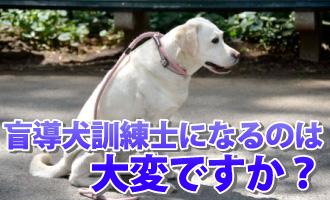盲導犬 英語 命令
